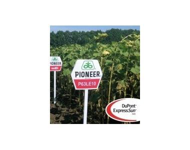Семена пионер П63ЛЕ10 / P63LE10 (новий) RM 37
