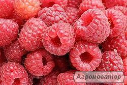 Малина, ягода.