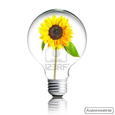 Насіннєвий матеріал соняшнику та кукурудзи