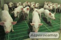 Підлоги для свиней, б/у підлоги для свиней, пластикові підлоги для свиноматок
