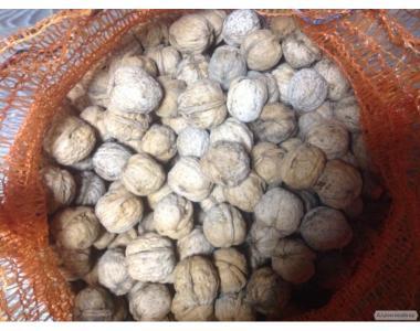 Експортуємо цілісний волоський горіх з України.
