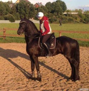 Фризские лошади на продажу