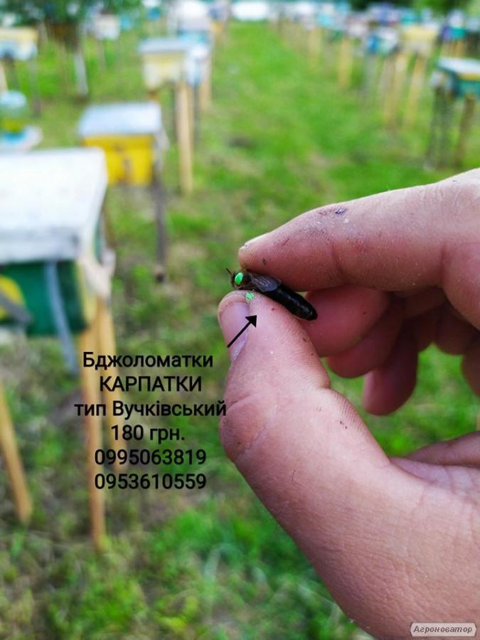 Пчеломатки Карпатки 2019 тип Вучковский