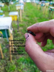 Бджоломатки Карпатки 2019 тип Вучківський