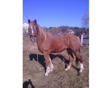 продаю пару коней ваговози!!!!