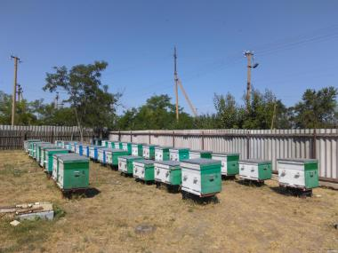 Продам бджолосім'ї в кількості 10-15 шт. на матках 2017р