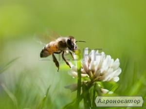 Продам 50 бджолопакетів