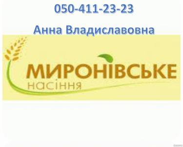 Озимий горох НС Мороз, 1 репродукція