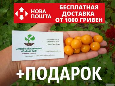 Физалис перуанский семена 50 шт (перуанская вишня)