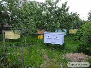 Продам сім'ї бджіл у вуликах або без