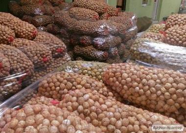 Продаем целый грецкий орех по Украине и на экспорт