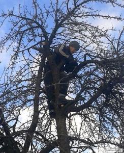 Зимова обрізка плодових дерев