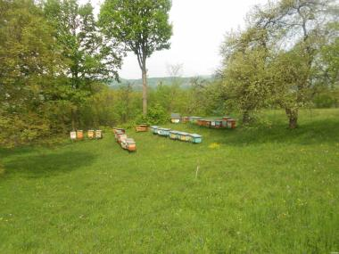продам бджолопакети карпатки та молодих плідних бджоломаток.