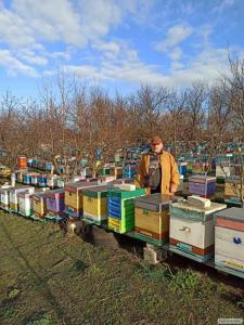 Продаю пчелосемьи, (пчелопакеты), карника, украинская степная
