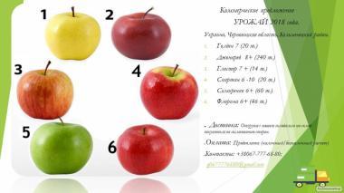 Яблука ОПТ
