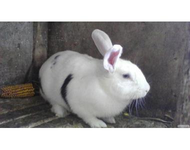 Продаю Кролики.