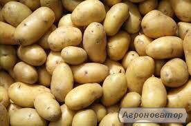 Картофель разных сортов продадим оптом.