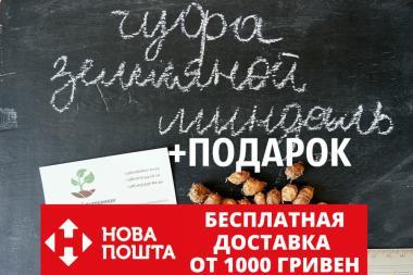 Чуфа семена(земляной орех миндаль,сыть,тигровый орех, зимовник)(100шт)