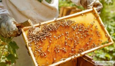 Продам бджолопакети 2017 рік. Продам карпатських бджіл 4-х рам дадан .