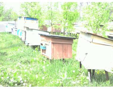 Продам бджолопакети 2019 рік. Продам карпатських бджіл 4-х рам дадан .