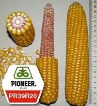 Семена кукурузы пионер ПР39Р20 / PR39R20 ФАО 290