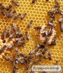 Продам свої бджолосім'ї