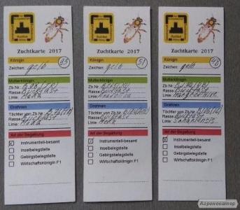 Бджоломатки бакфаст з Польщі Штучного Осіменіння