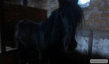 Продаж коней