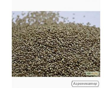 Семена тимофеевки оптом