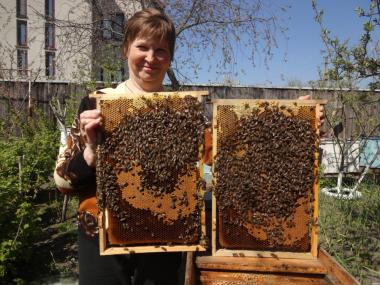ПРОДАМ або ОБМІНЯЮ на гранулятор кормів бджолині сім'ї.