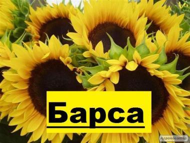 """Компанія """"ГРАН"""" пропонує насіння соняшнику - Барса (112 – 116 дн)"""