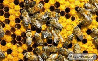 Продам пчелопакеты 2017
