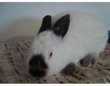 Продам кролів с кращих порід!!!
