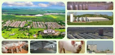 Продажа  фермерского комплекса для производства свиней, разведения КРС