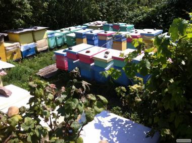 Бджолопакети;