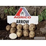 Картофель семенной Эроу