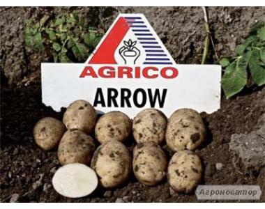 Насіннєва картопля Эроу