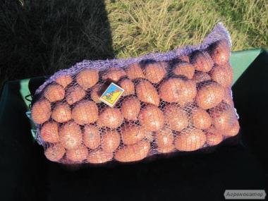 Домашня картопля