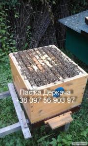 Пчелопакеты и пчелосемьи доставка