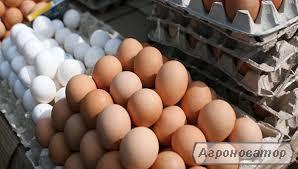 Продам яйцо куриное ( столовое )