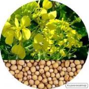Пропонуємо насіння гірчиці білої