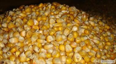 Продаємо кукурудзу