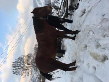продам коня 6 років зріст 162