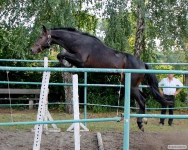 Молоді спортивні коні.Відео в тексті