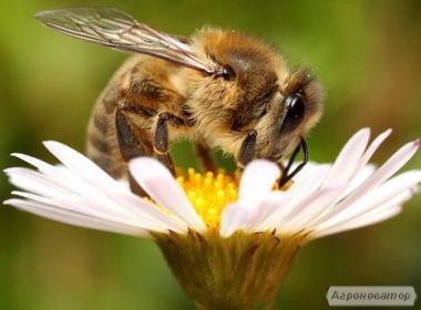Продам ящики для перевозки пчел