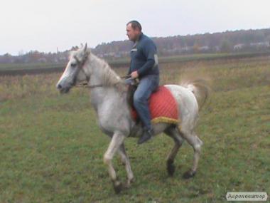 Оловська Рысачка
