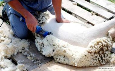 Стрижка овець ( працюємо по всій Україні)