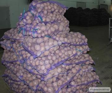 Картофель 3-х сортов оптом со склада в Киеве