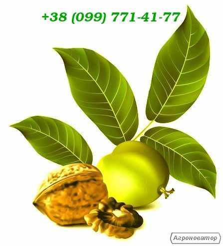 Грецкий орех кругляк
