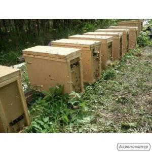 Пчёлопакет